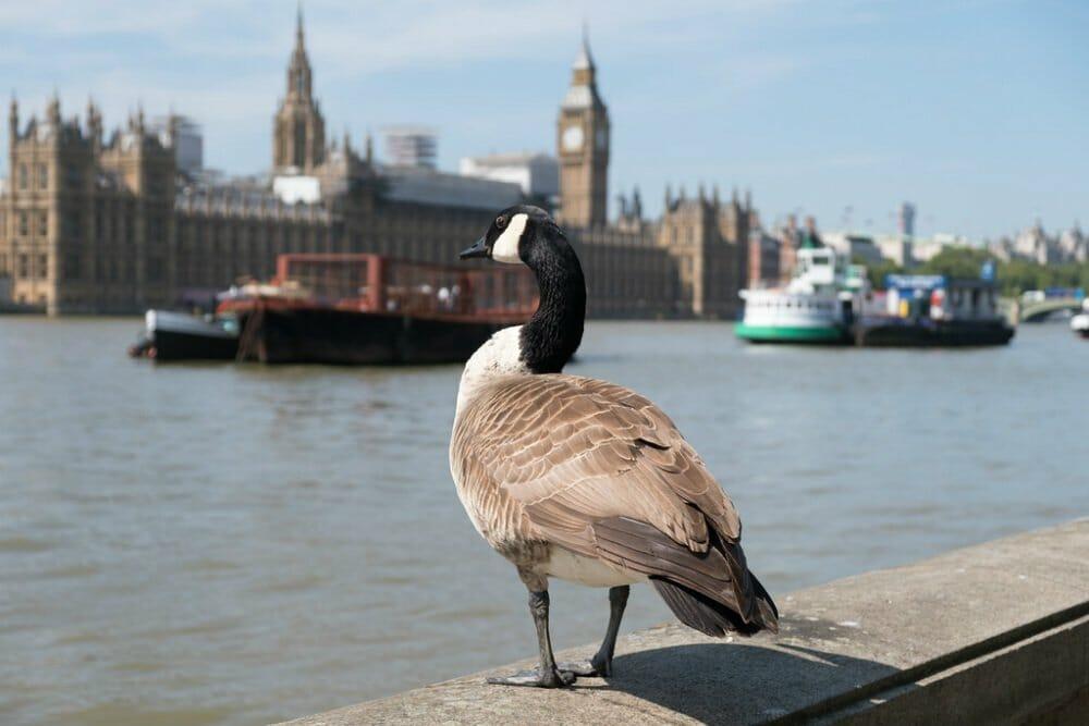 London autumn walks