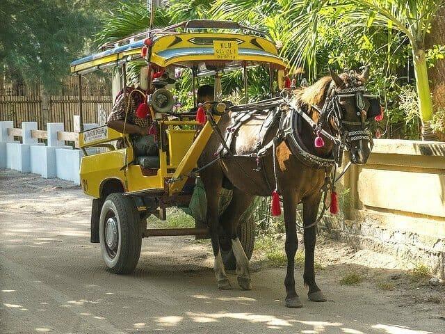 Donkey transportation on Gili Trawangan