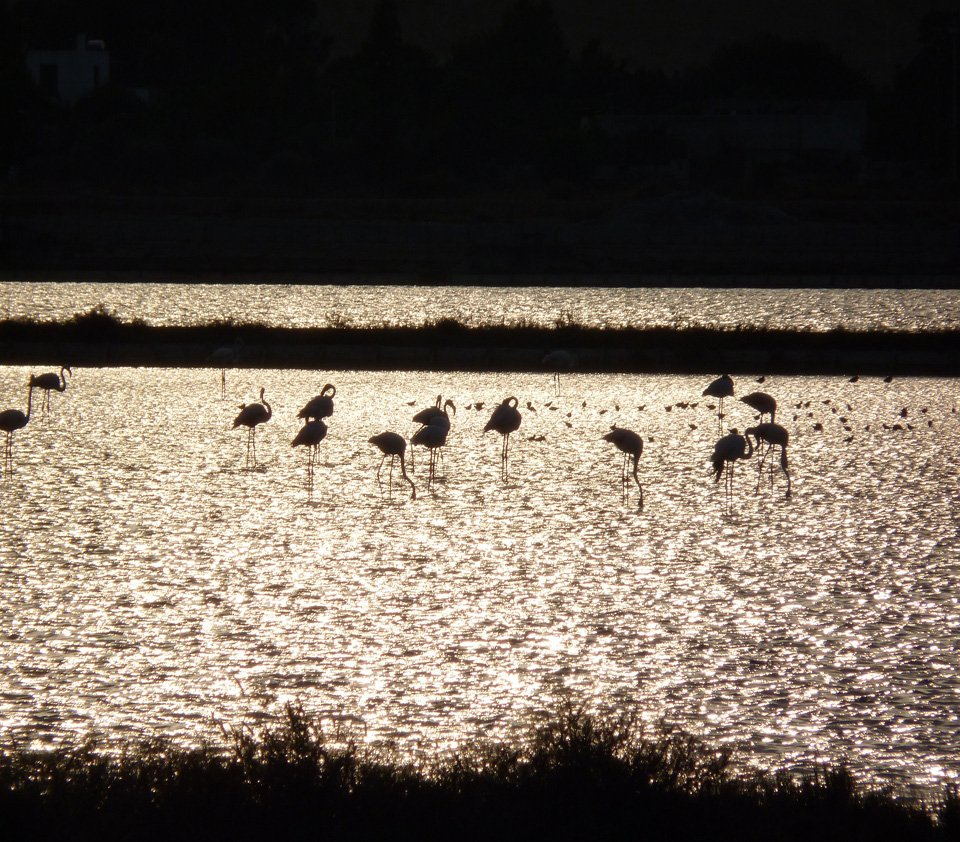 places in Sardinia - flamingoes