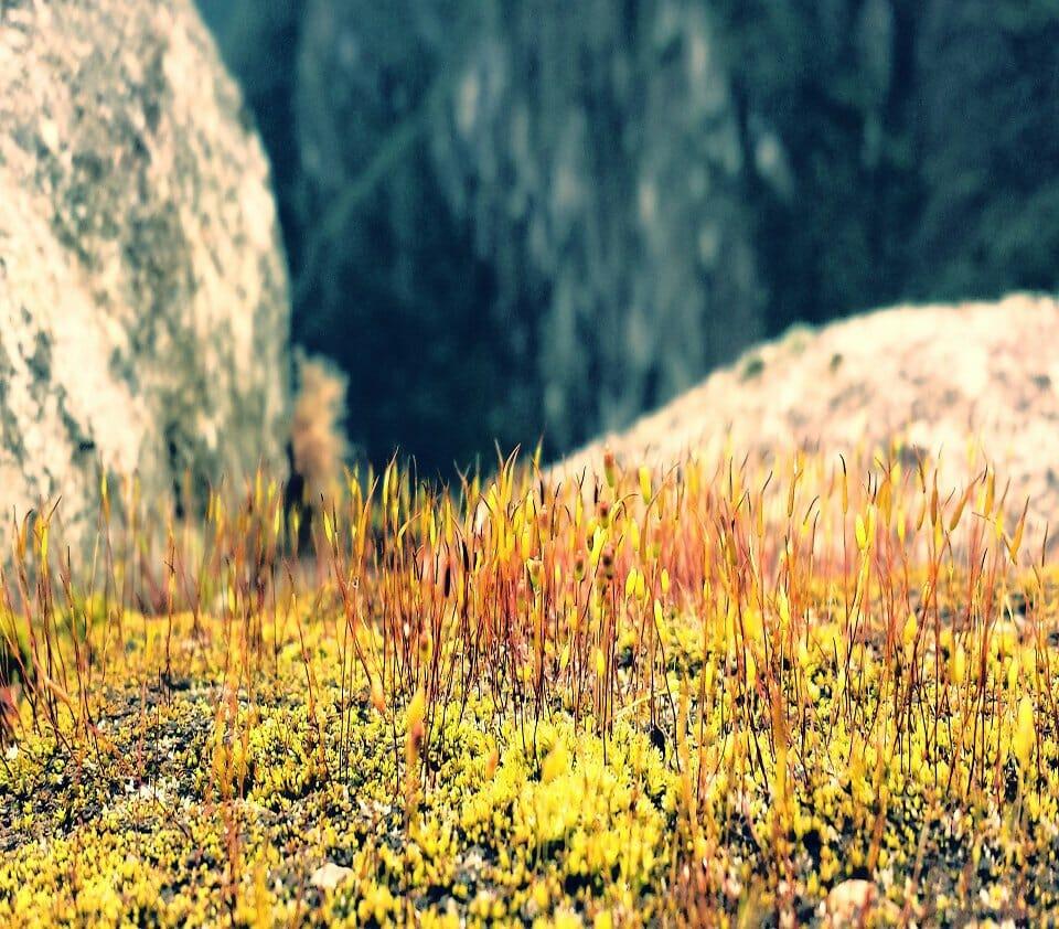 Sardinia photography - Su Gorruppu Gorge