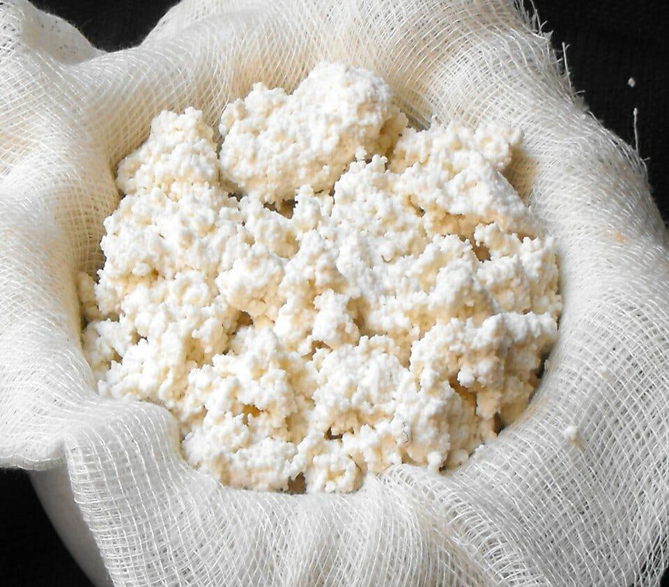 Sardinian cheeses - Sardinia ricotta