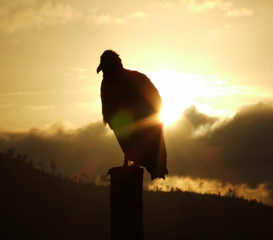 Sardinia photography - photograph birds in Bosa