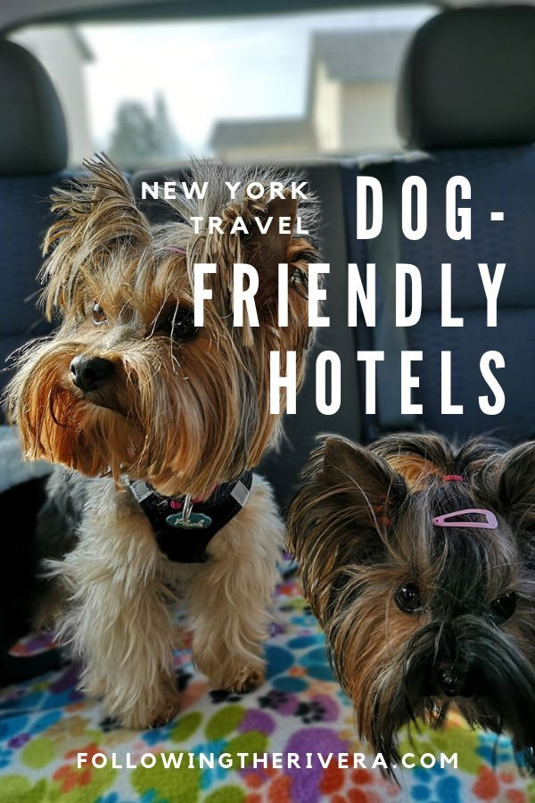 NYC Dog-friendly hotels — 7 good reasons to choose the Crosby Street Hotel 3