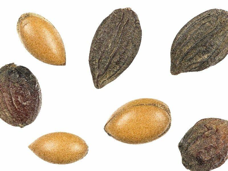 Sweet-smelling argan oils in travel size
