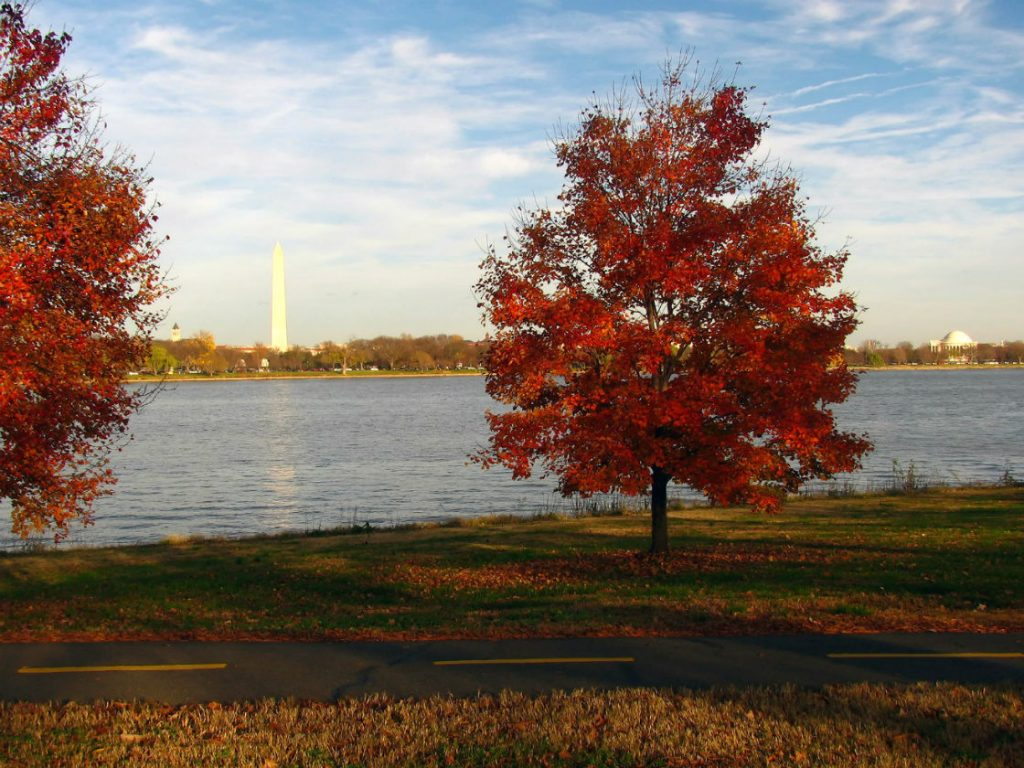 New York in fall - Washington DC