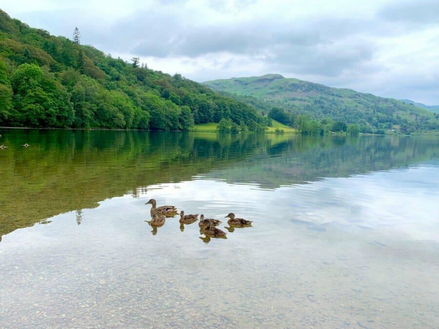 Ducks at Rydal Water - Lake District short breaks