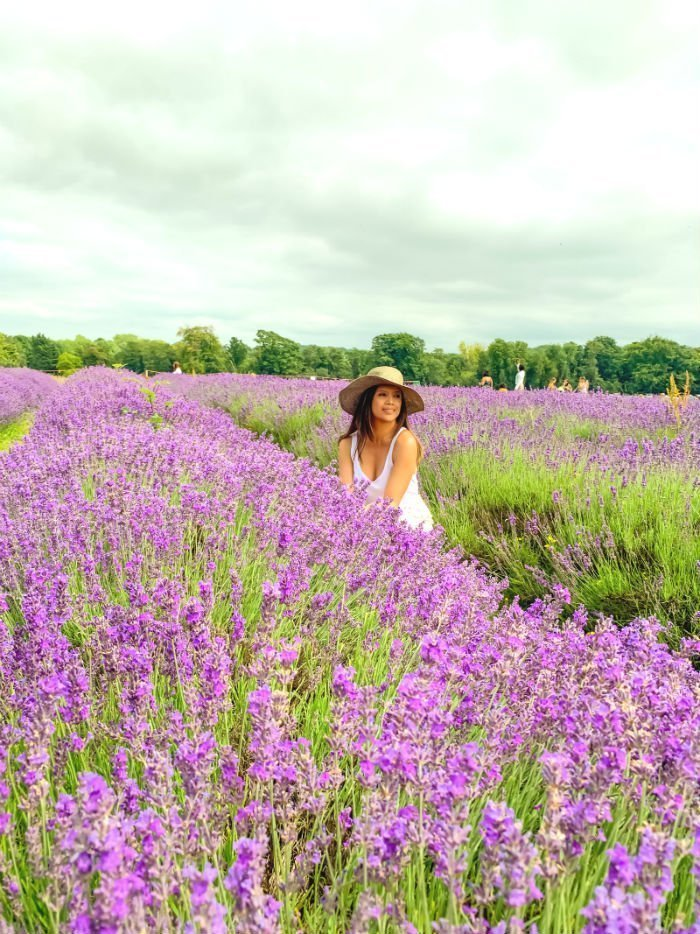 A perfect purple paradise at Mayfield Lavender Farm 7
