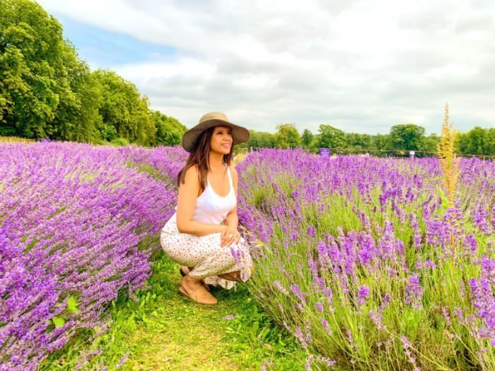 A perfect purple paradise at Mayfield Lavender Farm 1