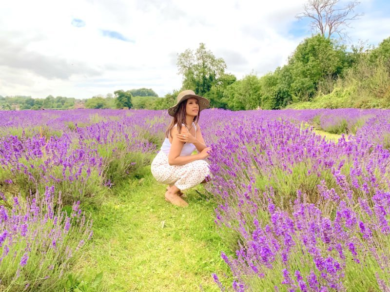 A perfect purple paradise at Mayfield Lavender Farm 3