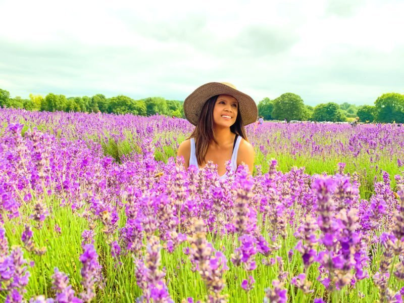A perfect purple paradise at Mayfield Lavender Farm 4