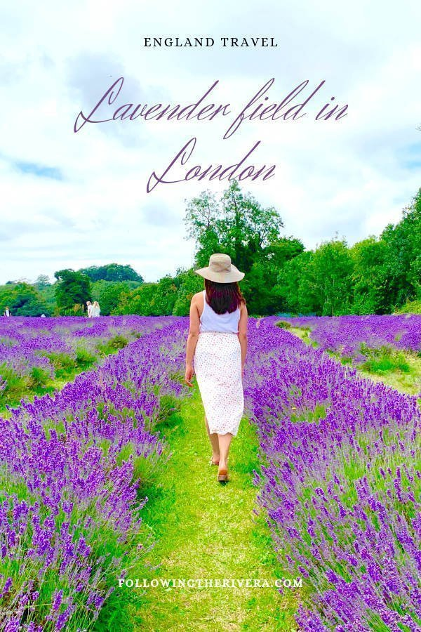 A perfect purple paradise at Mayfield Lavender Farm 9