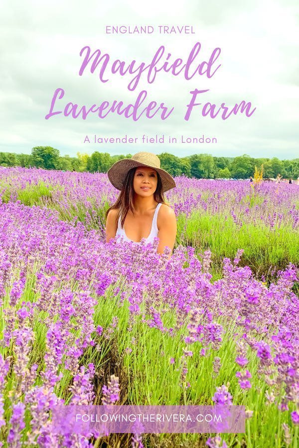 A perfect purple paradise at Mayfield Lavender Farm 8