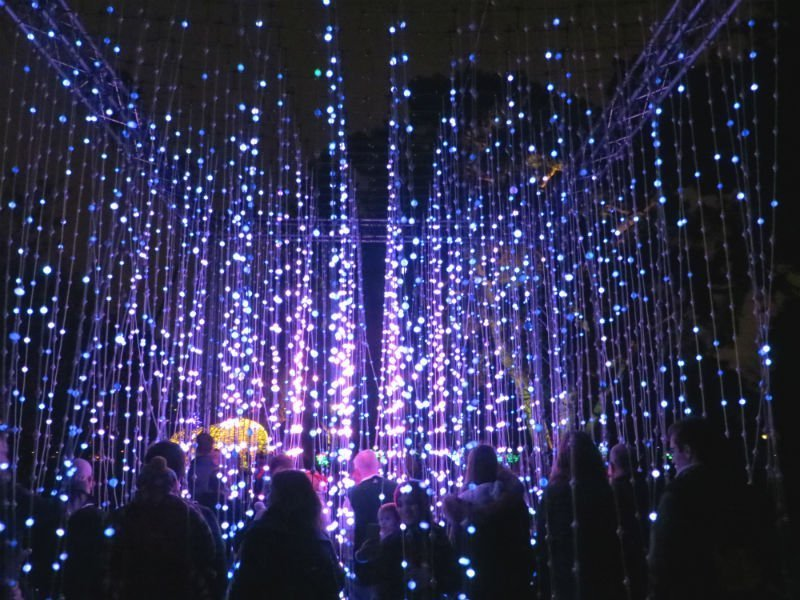 Kew Gardens Christmas lights display — London Christmas lights