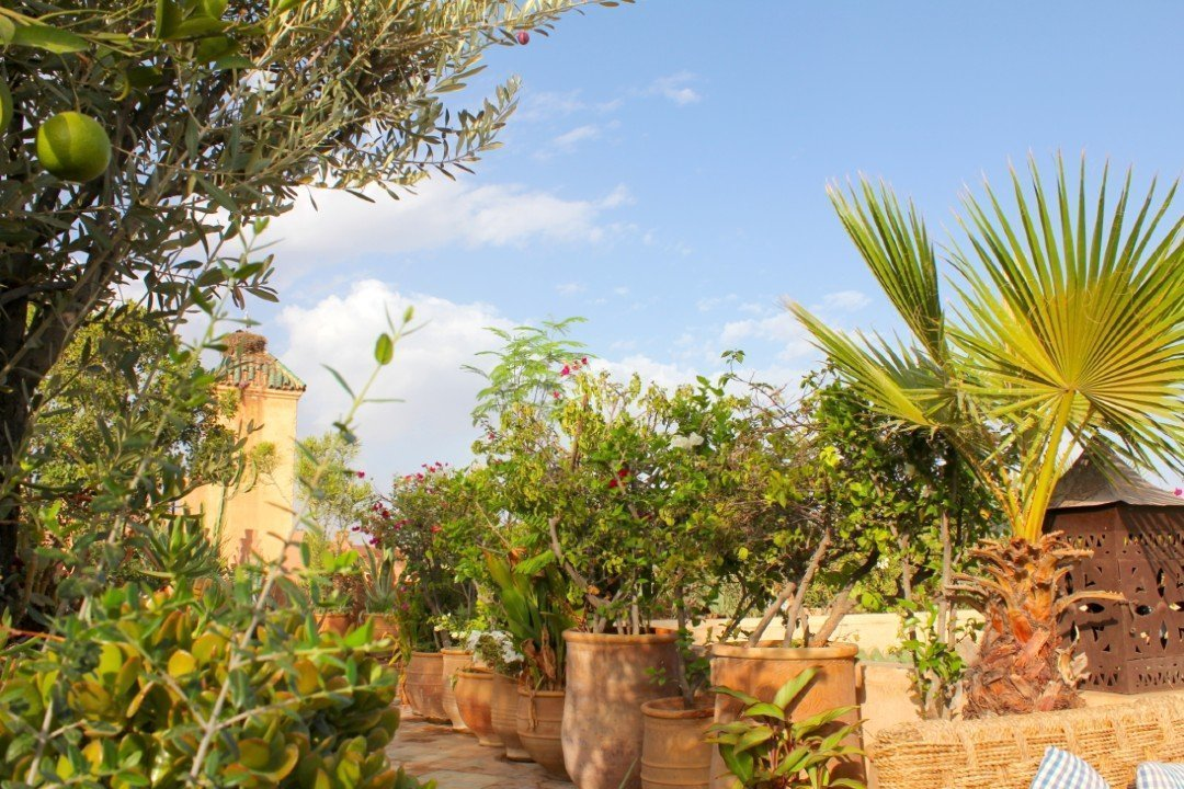 Dar Les Cicognes garden — Morocco in October