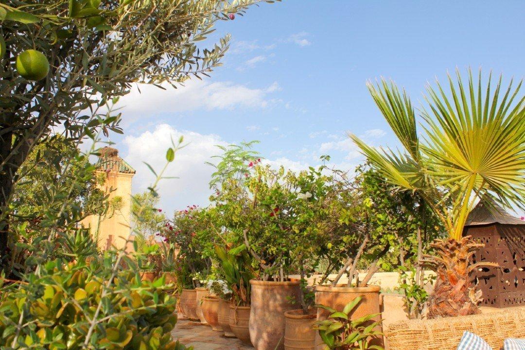 Dar Les Cicognes garden — Morocco in October