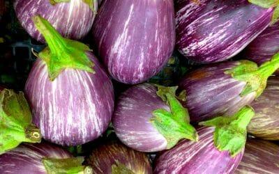 Melanzane alla Sassarese — Sassari eggplants in 40 minutes
