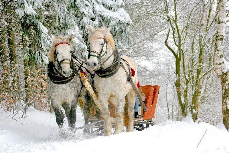 Breckenridge horse drawn sleigh ride — places to visit in Colorado in the winter