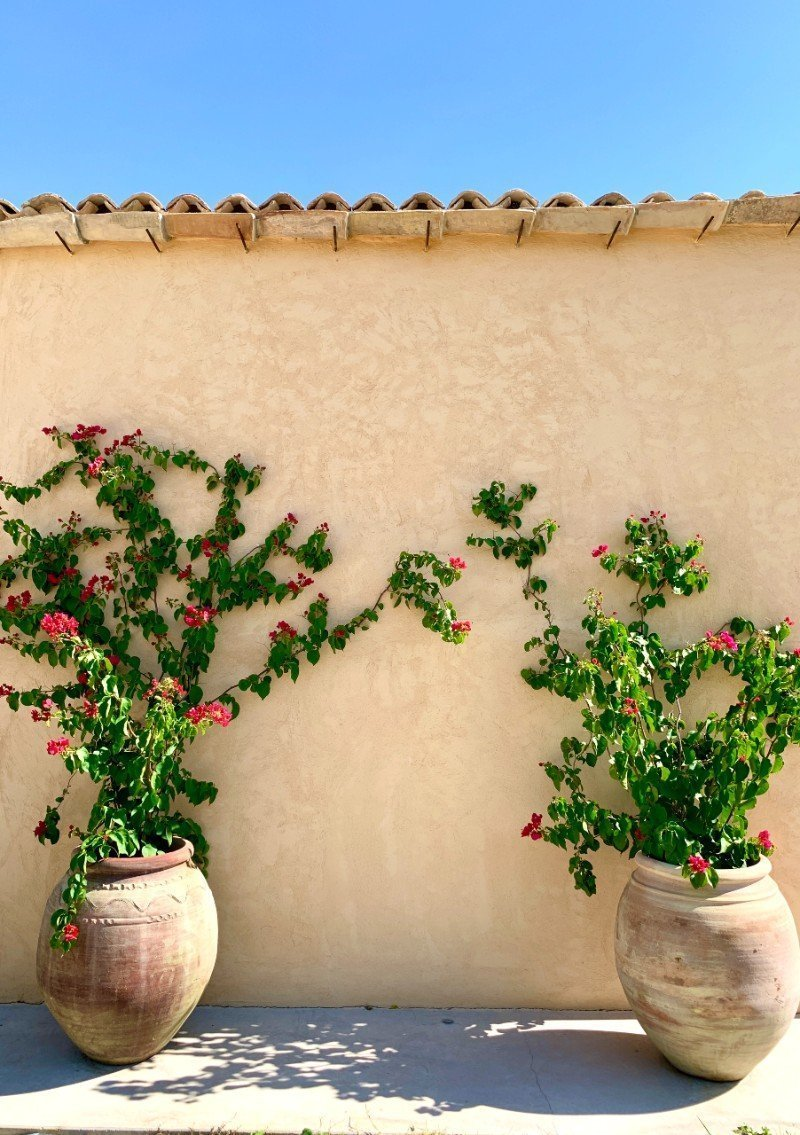Plants in vases at IUTA - glamping in Sicily