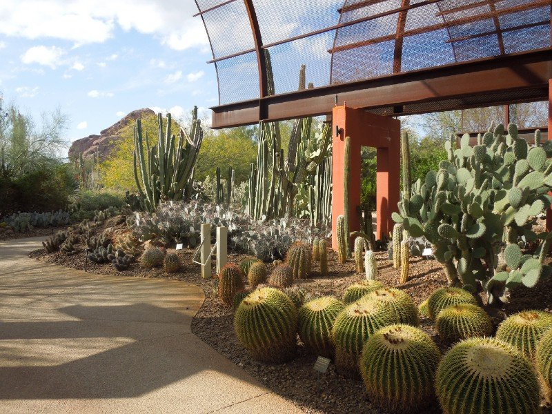 Desert Botanical Garden- warm places to visit in February in USA
