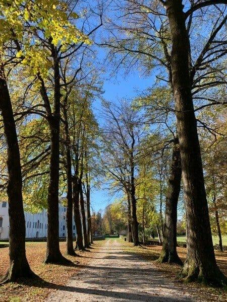 Trees Villa Contarini - Piazzola sul Brenta